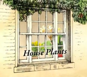 House Plants on BBC